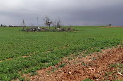 Daños Agricultura Cinegética