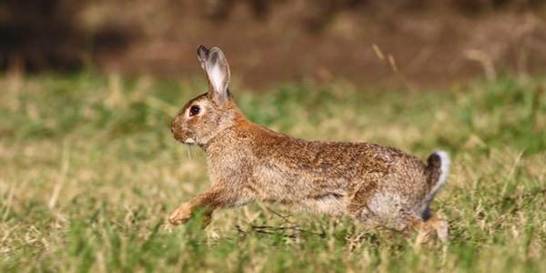 Daños causados por conejos