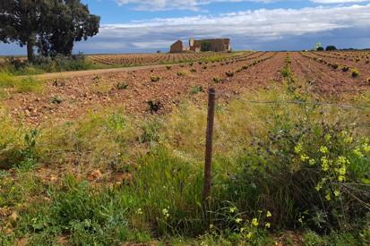 Emergencia cinegética en Castilla La Mancha